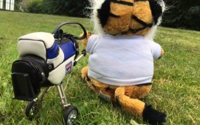 """Herr Tiger freut sich auf die """"The Open"""" und hält ein Tippspiel für Sie parat!"""